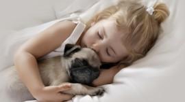 4K Sleeping Animals Wallpaper HQ#1
