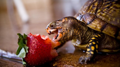 A Turtle Eats wallpapers high quality