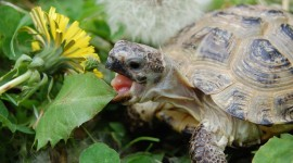 A Turtle Eats Photo