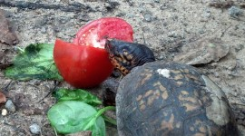 A Turtle Eats Photo Download