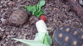 A Turtle Eats Photo Download#1