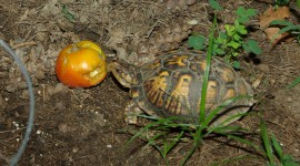 A Turtle Eats Photo#1