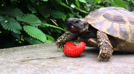 A Turtle Eats Wallpaper 1080p
