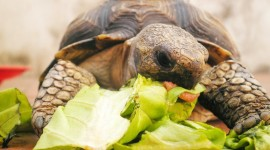 A Turtle Eats Wallpaper Download