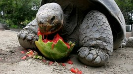 A Turtle Eats Wallpaper Gallery