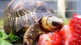 A Turtle Eats Wallpaper HQ