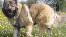 Big Dogs Wallpaper 1080p