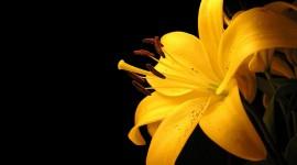 Black Yellow Wallpaper Download Free