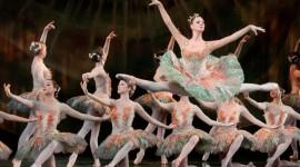 Don Quixote The Ballet Photo Free#1