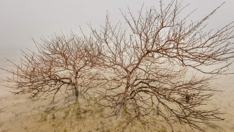 Dry Trees wallpapers high quality