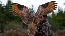 Eagle-Owl Wallpaper Download