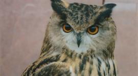 Eagle-Owl Wallpaper Gallery