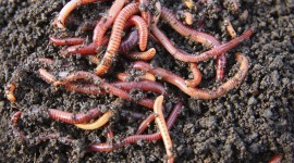 Earthworm High Quality Wallpaper