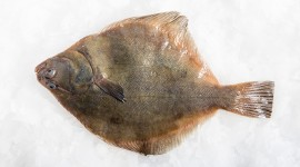 Flounder Wallpaper Free