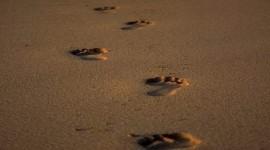 Footprints Of Jesus Christ Photo Free