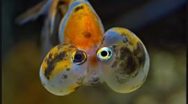 Funny Fish Desktop Wallpaper