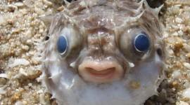Funny Fish Desktop Wallpaper HD