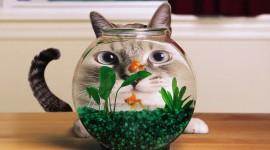 Funny Fish Photo
