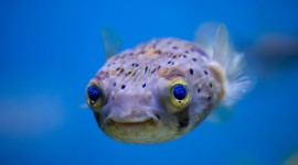 Funny Fish Photo Free