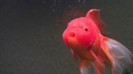 Funny Fish Wallpaper For Desktop
