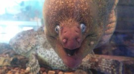 Funny Fish Wallpaper For IPhone#1