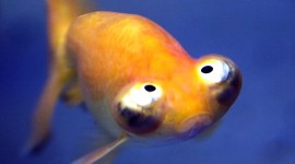 Funny Fish Wallpaper For Mobile#1