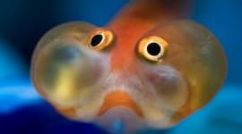 Funny Fish Wallpaper Free