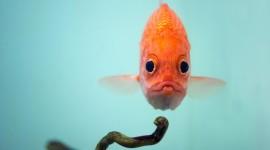 Funny Fish Wallpaper Full HD
