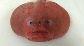 Funny Fish Wallpaper Gallery