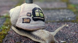 Funny Snails Photo