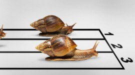 Funny Snails Wallpaper For Desktop