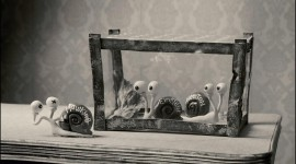 Funny Snails Wallpaper For PC