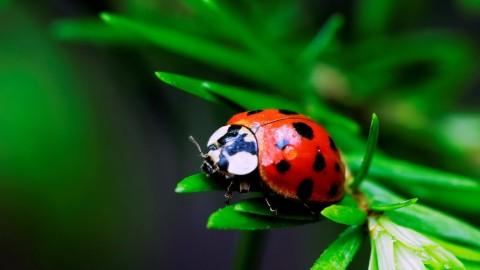 Ladybug wallpapers high quality