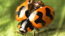 Ladybug Desktop Wallpaper Free