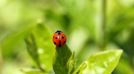 Ladybug Wallpaper Download Free
