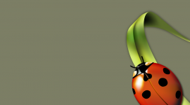 Ladybug Wallpaper For PC