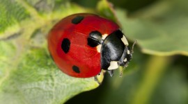 Ladybug Wallpaper Free