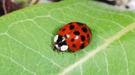 Ladybug Wallpaper Gallery