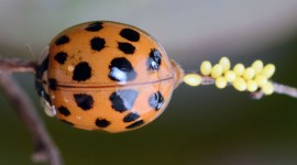 Ladybug Wallpaper HQ