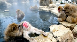 Monkey Swim Photo