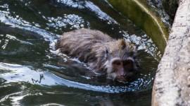 Monkey Swim Photo Download