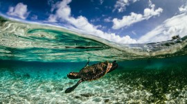 Photography Under Water Wallpaper Download Free