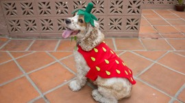 Strawberry Costume Photo Free