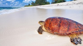 Turtles At Sunset Beach Photo Download