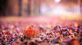 4K Colorful Leaves Desktop Wallpaper For PC