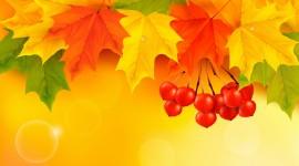 4K Colorful Leaves Image Download