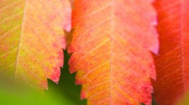 4K Colorful Leaves Photo