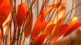 4K Colorful Leaves Photo Download