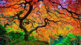 4K Colorful Leaves Photo Free