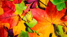 4K Colorful Leaves Photo#1